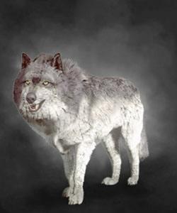 The Witcher 3 Bestiary Quiz - By tomschmo